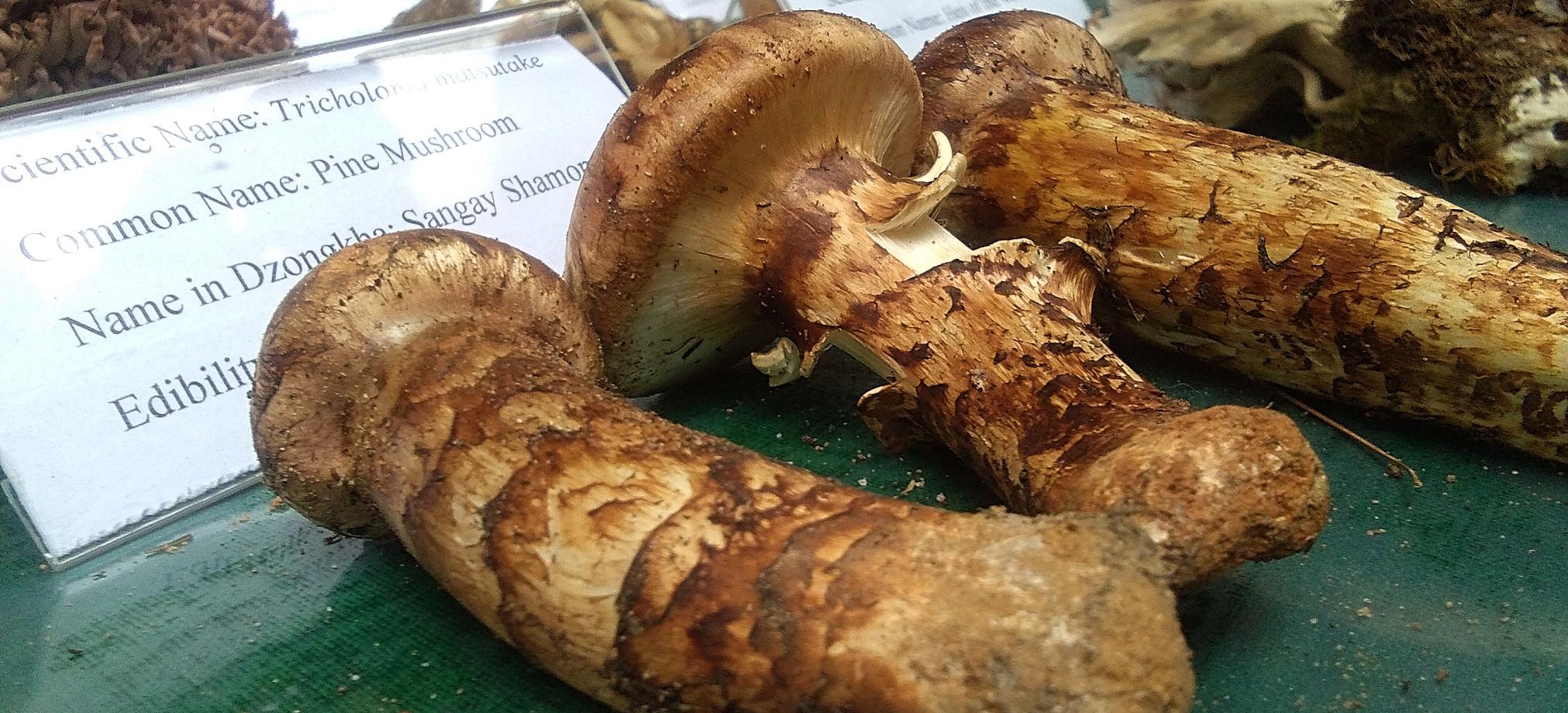 Genekha Mushroom Festival